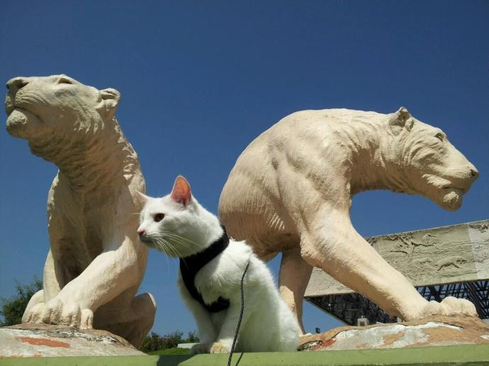 Laverne the One-Eyed Cat. La Brea Tarpits.