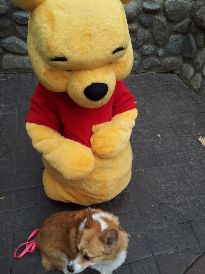 Pancake the Corgi hangs out with Winnie the Pooh at Disneyland