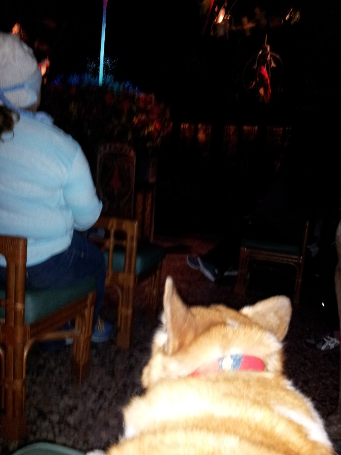 Pancake the Corgi in the Tiki Room