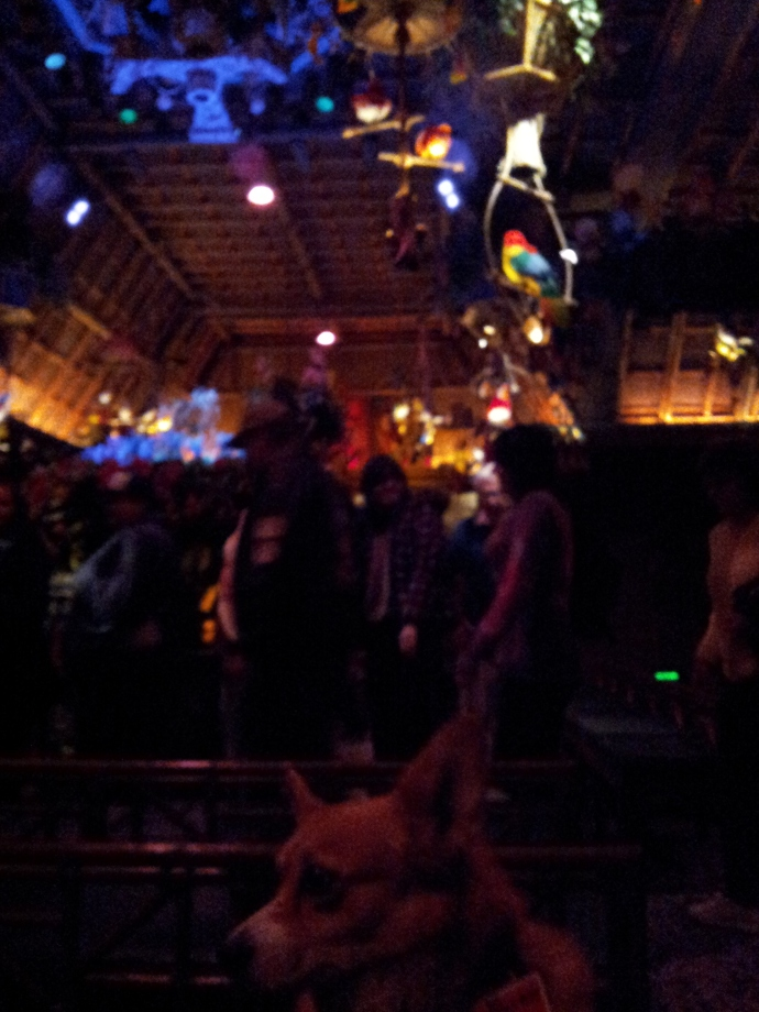 Pancake the Corgi in the Tiki Room Four