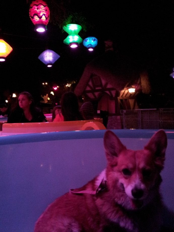 Pancake the Corgi in the Teacups two