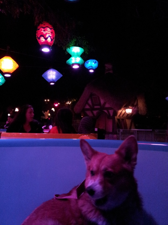Pancake the Corgi in the Teacups Three