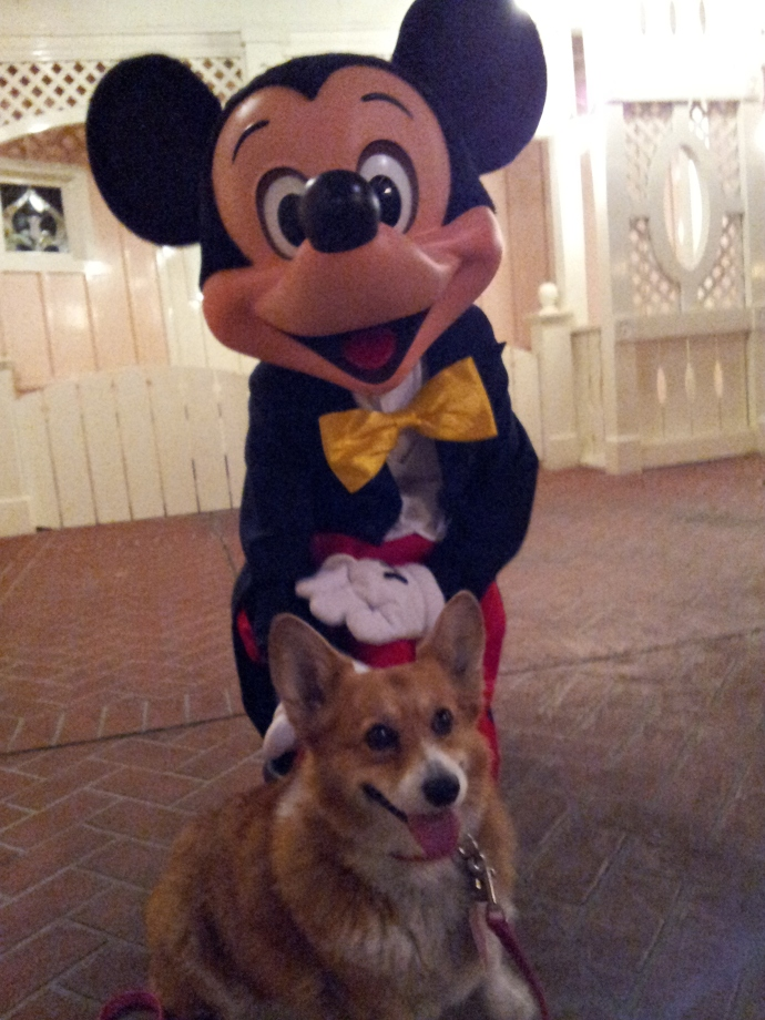 Pancake the Corgi and the Mouse himself