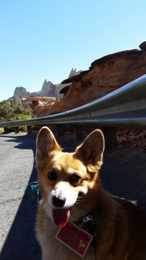 Pancake the Corgi at California Adventure Cars Ride