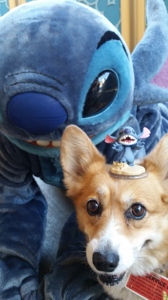 Pancake the Corgi at California Adventure with Stitch and Disney Infinity