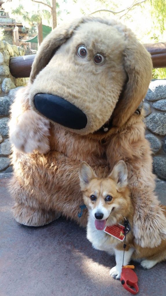 Pancake the Corgi at California Adventure with Dug from Up