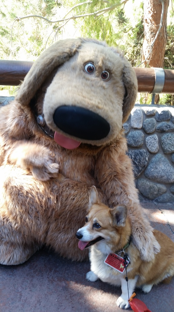 Pancake the Corgi at California Adventure with Dug from Up - service dog