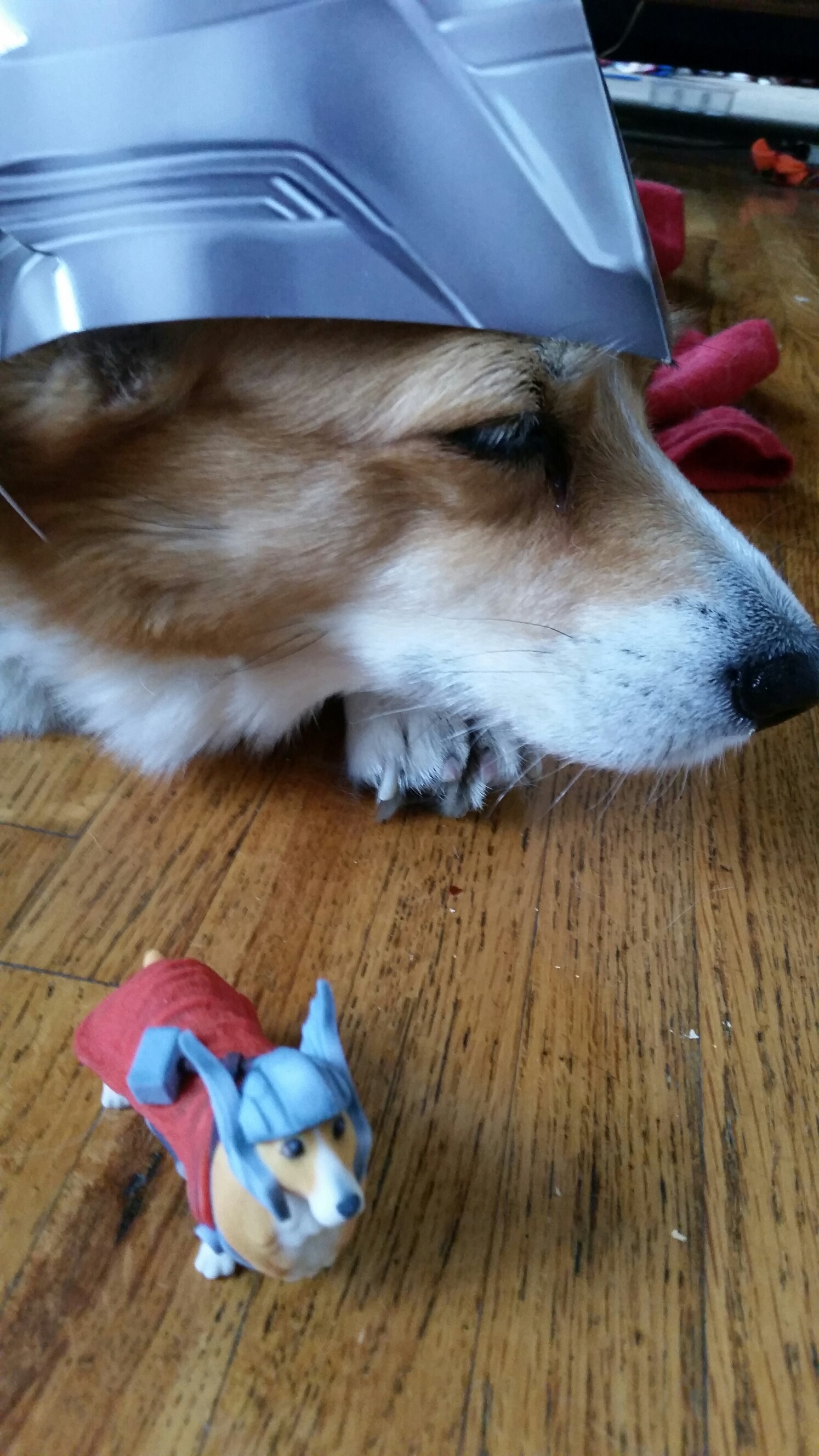 Pancake the Corgi as Thorgi