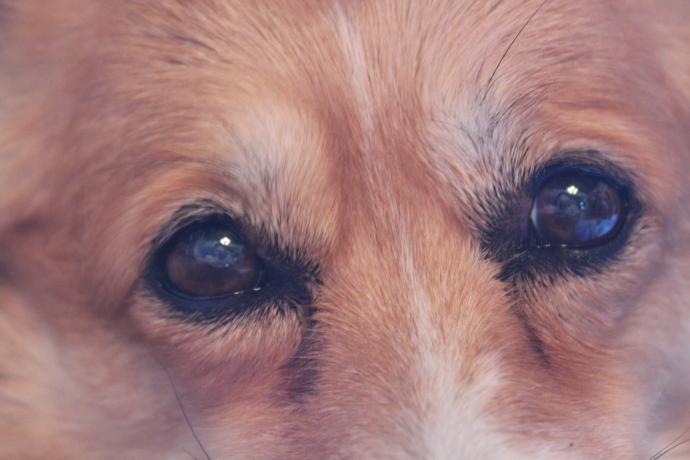 Pancake's Eyes